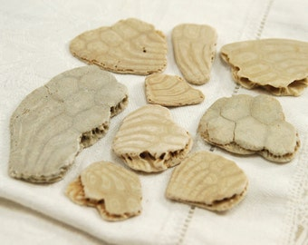 9 fossil sand dollar pieces with beautiful patterns (no.b23)