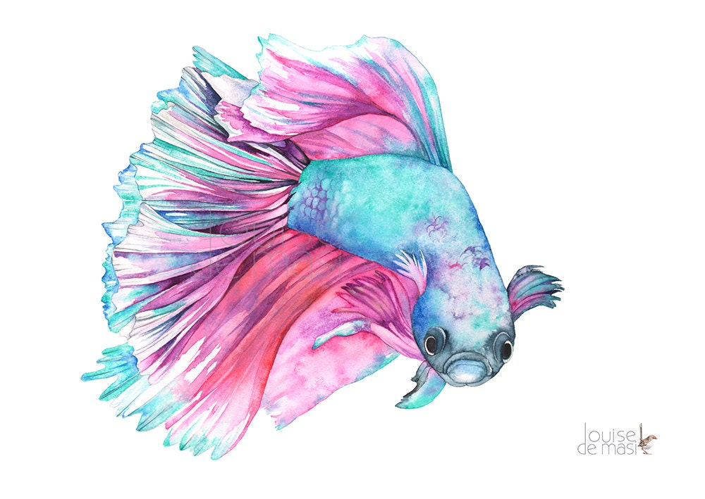 Fighting fish print of watercolor painting ff18717 a4 size for Watercolor fish painting