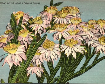 Night Blooming Cereus - Linen Postcard - Postcard - Unused (II)