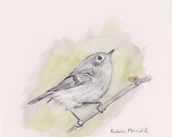 Ruby-crowned Kinglet Original 5x5 Pencil and Watercolor,bird,nature,graphite,ruby-crowned kinglet, wildlife,bird art, NOT A Print,original