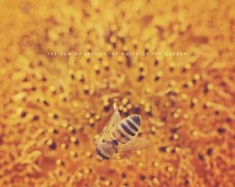 Bee Art, Bee Photography, Bee Gift, Bee Photo, Bee Print, Honey Bee Gift, Honey Bee Print, Honey Bee Photo, Honey Bee Art, Bee Lover