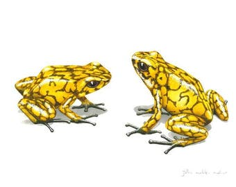 Signed Print - Two yellow Diablito poison dart frogs - small