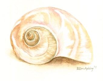 Shell Painting, Coastal Watercolor Art, Beach Shell Print, Seashell Art, Coastal Shell Art, Giclee Watercolor Art, Coastal Shell Art