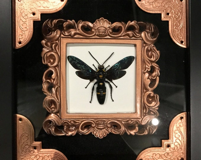 Giant taxidermy Indonesian wasp display!
