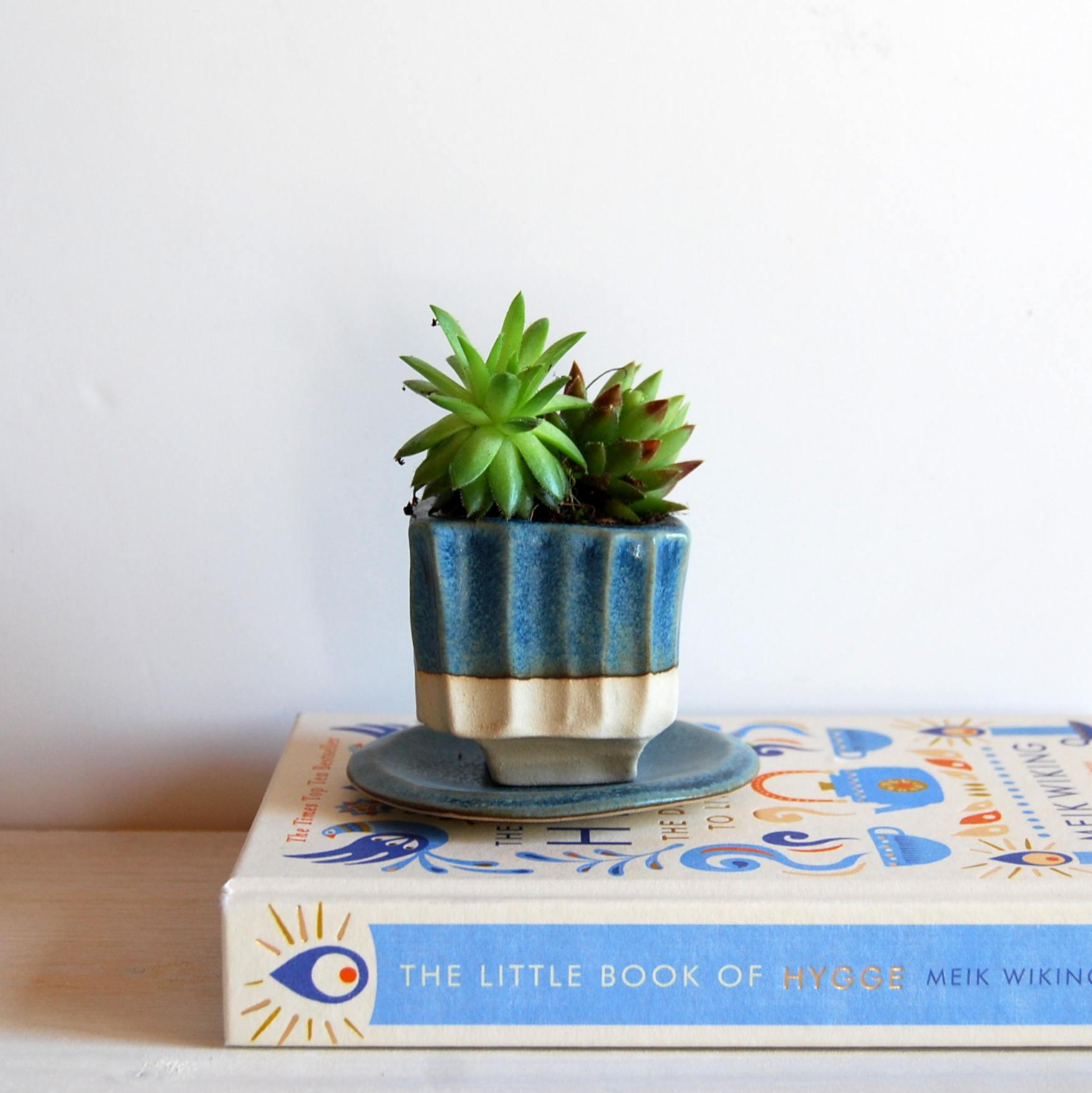 succulent pot with drainage hole cactus pot small plant pot. Black Bedroom Furniture Sets. Home Design Ideas