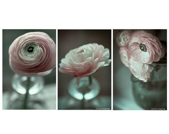 Pink Ranunculus Print Set - Set of 3 ranunculus flowers 8x10 photo gray still life photography 11x14 ranunculus wall art 16x20 flower prints
