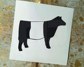 Show Cattle Belted Galloway Heifer Vinyl Sticker