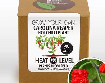 SALE NOW ON!!! - Grow Your Own Carolina Reaper Chilli Plant Kit