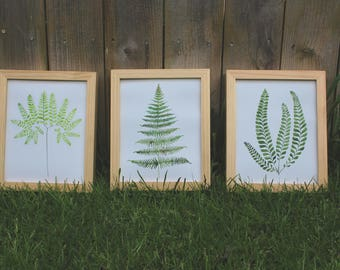 Trio of Ferns  (Prints Only)
