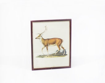 Deer art print frame.