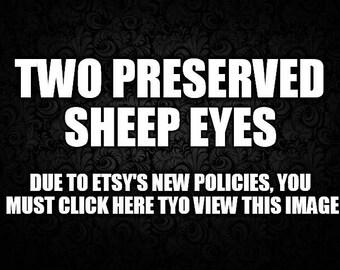 Two/2 Preserved Sheep Eyes/Eyeballs Wet Specimen