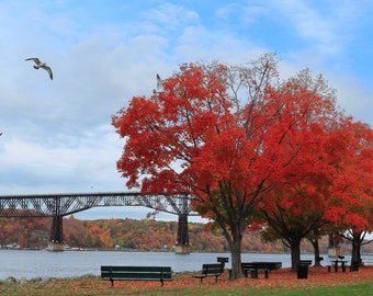 Red Trees with Seagulls on the Hudson River Photograph with the Walkway Over the Hudson in Poughkeepsie, NY - Hudson Valley Fall Color Photo