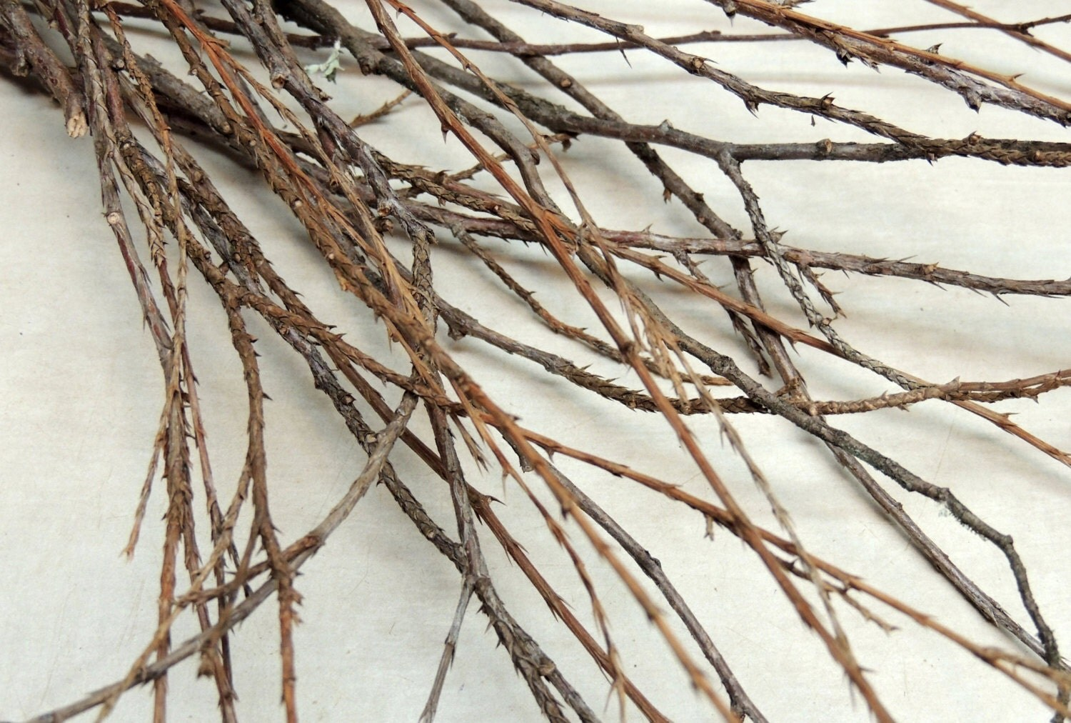 20 Cedar Twigs And Branches 16 To 24 Long For Dried