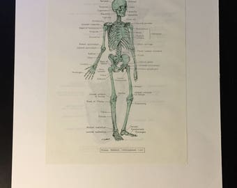 Skeletons and Muscles – Reclaimed Anatomy Drawings