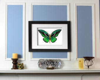 Limited Edition Signed Mechanical Green Butterfly Fine Art Print