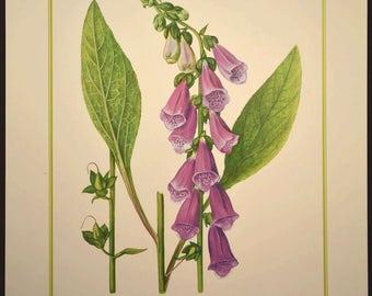 Purple Wild Flower Wall Art Nature Print Decor Botanical Art