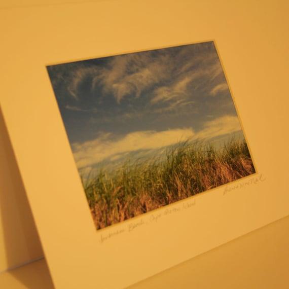 Cape Breton Beach Grass