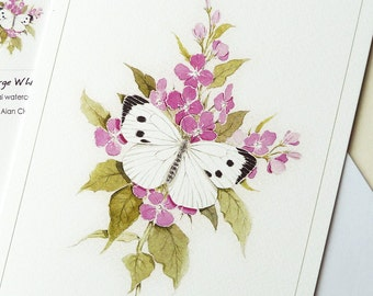 Butterfly Card, 'Large White' Butterfly from an original Watercolour Painting by Alan Clow