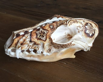 Raccoon Skull - Pyrography Art - Art On Bone -  Skull Decor - Real Animal Skull - Pretty Decor - Unique Art - Taxidermy Art - TimberleeEU