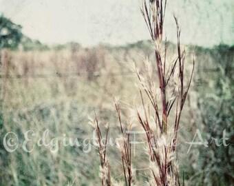 Wheat print, rural decor, wheat field photo, nature photography, farm photo, landscape photo, farm decor, farmhouse decor, nature art,