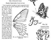 Graphic 45 Nature's Sketchbook Stamps 1, SC007689
