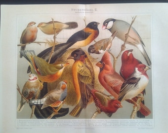 "Chromolithograph, ""Exchange birds II.""."