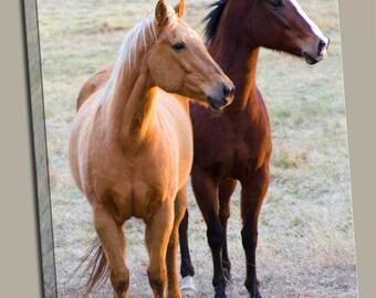 2 Horses Gallery Wrap Canvas Photo Print Fine Wall Art, Brown Tan Horse Race Pony Equestrian Farm Animal Pet Green Field Wildlife Photograph