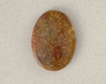 Petrified Coral #1048
