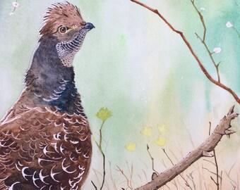 "Watercolor Pine Grouse, Art Print 8""*10"""
