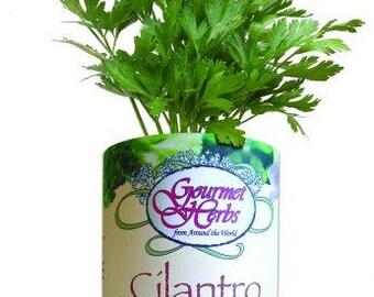 Cilantro Garden Kit