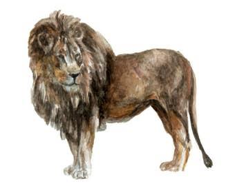 Watercolor Lion Print, Lion Art Print