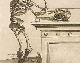 "Thomas Geminus ""Skeleton Inspecting Skull in Deep Contemplation"" 1545 8.50"" x 11"" JPG  Digital Download Printable Art Commercial Use"