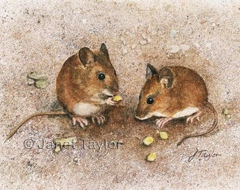 MOUSE PAINTING:  Print of an original watercolour by Jan Taylor, 'A Pair of Wood Mice'