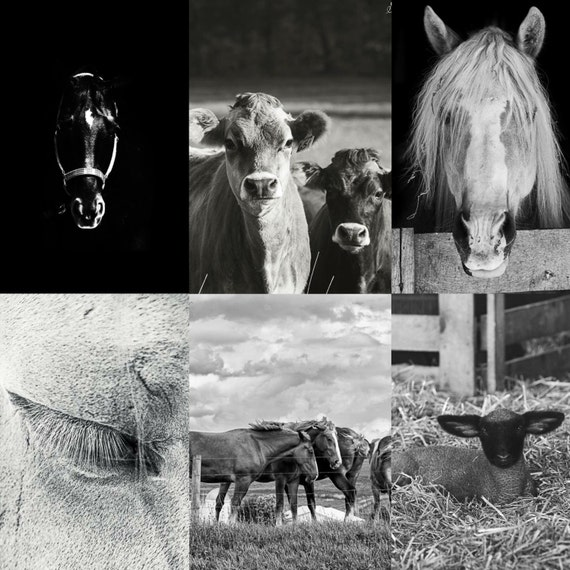 Metal Prints - Ready to Hang - Fine Art Photography - Photo on Metal - Metal Wall Art - Farm House Decor - Gifts - Horses - Cows - Pictures