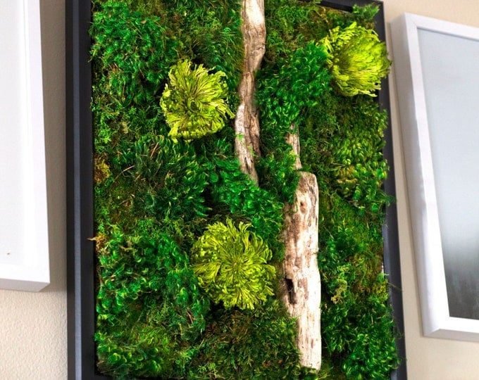 "Moss Wall Art ~ Moss Art Work ~ REAL Preserved Moss ~ No Maintenance Required ~ 16""x20"" ~ ""Burst"""