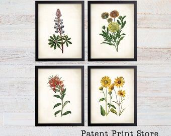 Texas Wildflower Botanical Art Prints. Botanical Print. Botanical poster. Botanical Illustration. Botanical Wall Art. Farmhouse Decor. (121)