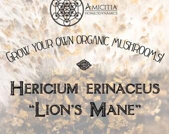 Organic Lion's Mane Sawdust Spawn (Hericium erinaceus) LIVE MYCELIUM - 50g *PDF Book Included