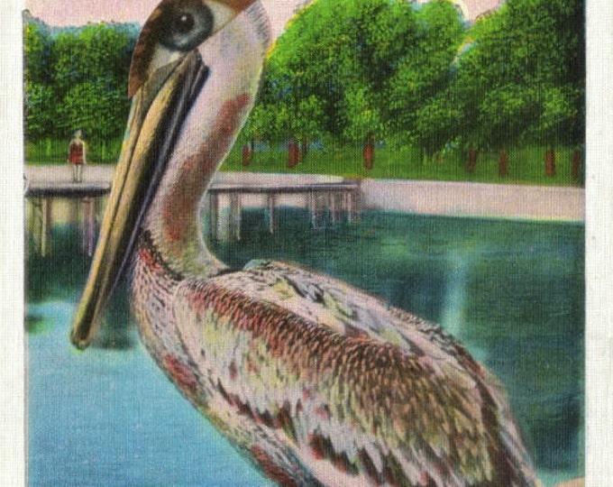 Original Collage Artwork, Pelican Art Postcard