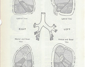 Human Anatomy Vintage Medical Anatomy Pulmonary Segments Illustrations to Frame or for Art Projects PSS 0180