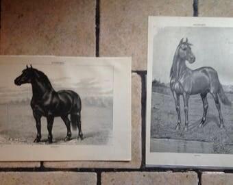 1890 Horse Antique Illustrations