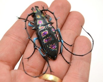 Purple-Spotted Jewel Longhorn Beetle - realistic dichroic lampwork glass insect beetle figurine glass artist Wesley Fleming