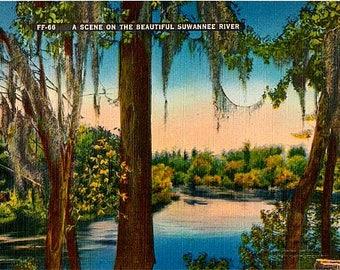 Vintage Florida Postcard - The Suwannee River at Sunset (Unused)