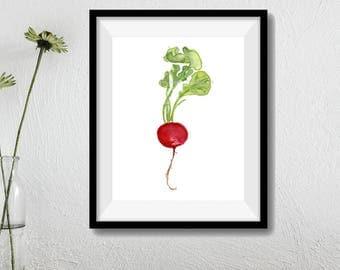 art print Small Radish number three, radish watercolor print, Kitchen art, Botanical painting, minimalist art print, radish art print