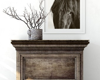 Horse, Black Horse Close Up Photograph, Equestrian Photography, Equine Wall Art, Nature Photograph