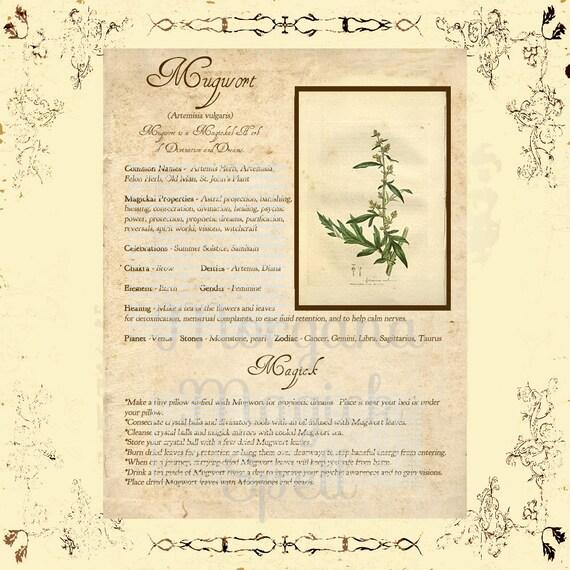 MUGWORT MAGICK HERB  Digital Download,  Book of Shadows  Grimoire, Scrapbook, Spells, White Magick, Wicca, Witchcraft, Herb Magic