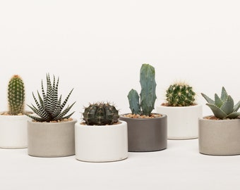 Concrete Planter, Mini Planter, Concrete Mini Planter, Succulent Planter, Cactus Planter, Catch All, 1 ea. 3 colors