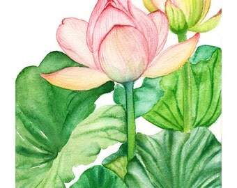 Lotus, Archival Print from a Watercolour Painting