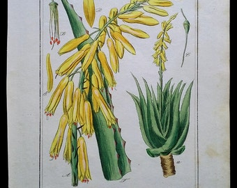 Aloe Vera Herb 1850, Winkler, Original Botanical Print, Hand Colored Engraving
