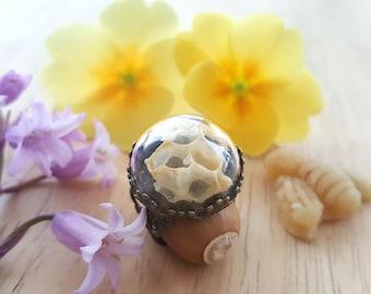 Honeycomb Ring, Terrarium Ring, Bee Statement Ring, Real Beehive Ring, Bees Wax Glass Globe, Terrarium Jewellery Scottish Honey Queen Bee