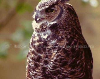 Owl, Wildlife Print, Nature Photography, Wall Decor, Home Decor, Wall Art, Wildlife Photography, Owl Photograph, Nature Lover Gift, Owls